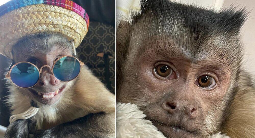 17,6 milyon takipçili Tiktok fenomeni maymun