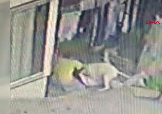 İstanbul Başakşehir'de 16 yaşındaki çocuğa pitbulllar saldırdı: 56 dikiş atıldı