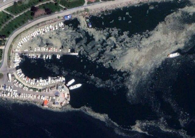 İskelelerin büyük bir bölümü, gemiler ve teknelerin etrafı tamamen salya ile kaplandı.