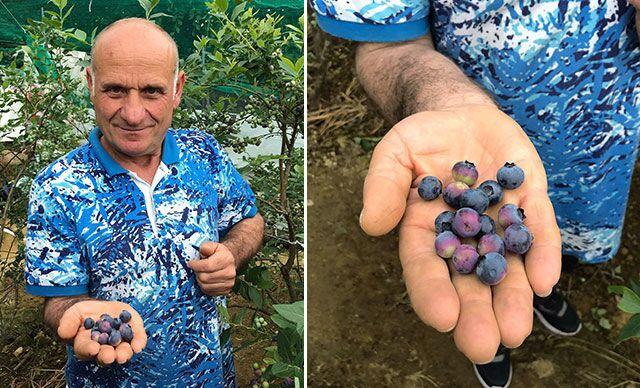 Trabzon'da denemek için ektiği yaban mersininden 100 bin lira gelir elde etti