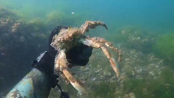 Müsilajın deniz altındaki tahribatı görüntülendi - Sputnik Türkiye