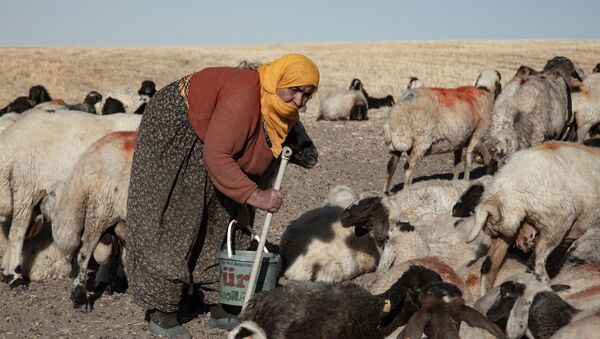 Yem fiyatlarındaki yüzde 100 artış nedeniyle hayvanlarını satıyorlar: 'Hayvancılığı bırakmak zorunda kalıyoruz' - Sputnik Türkiye