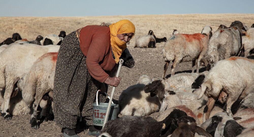 Yem fiyatlarındaki yüzde 100 artış nedeniyle hayvanlarını satıyorlar: 'Hayvancılığı bırakmak zorunda kalıyoruz'