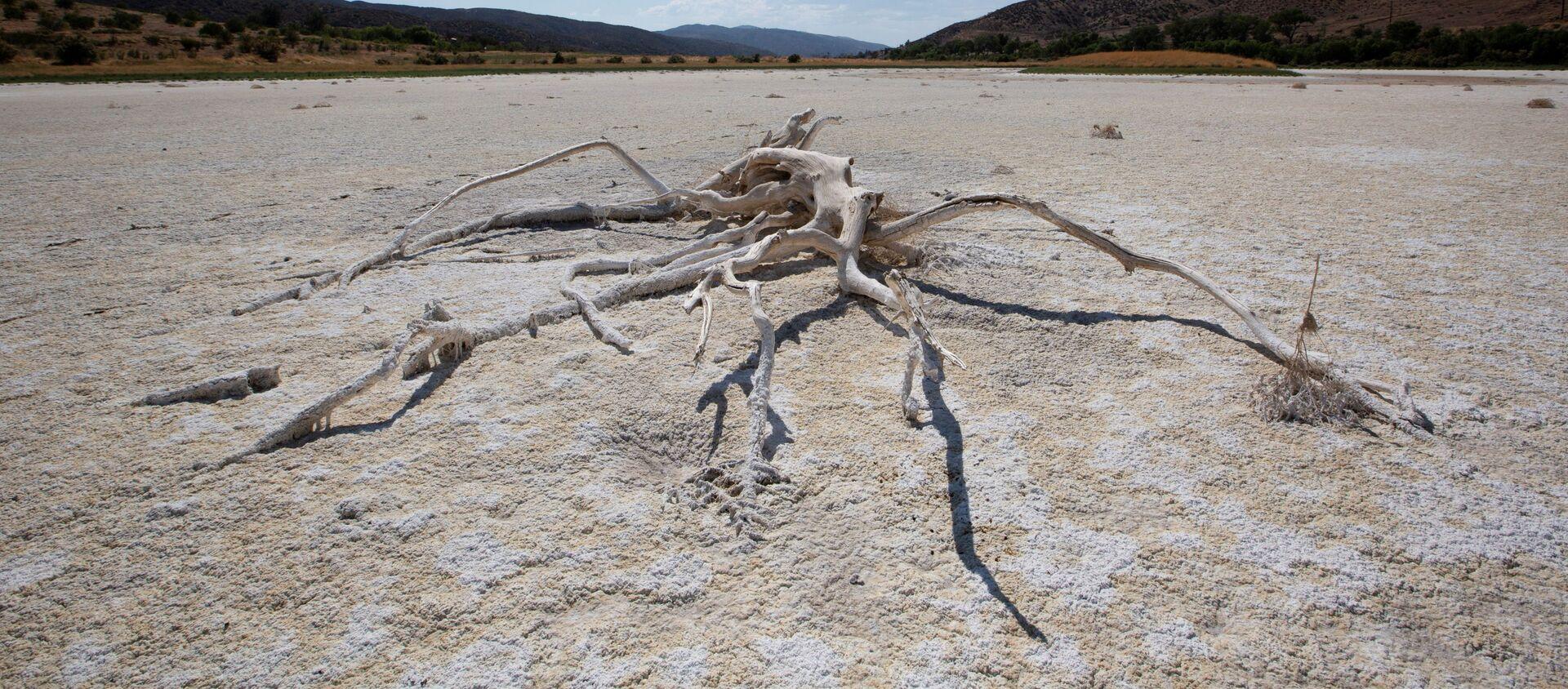 ABD'nin batı yakasında aşırı sıcak-kuraklık döngüsünde kuruyan Elizabeth Gölü (Los Angeles, Kaliforniya) - Sputnik Türkiye, 1920, 09.07.2021