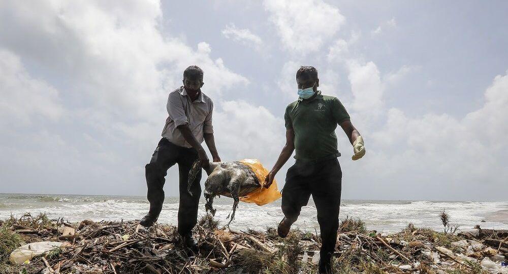 Sri Lanka'da gemi yangınından sonra ölü kaplumbağalar kıyıya vurdu