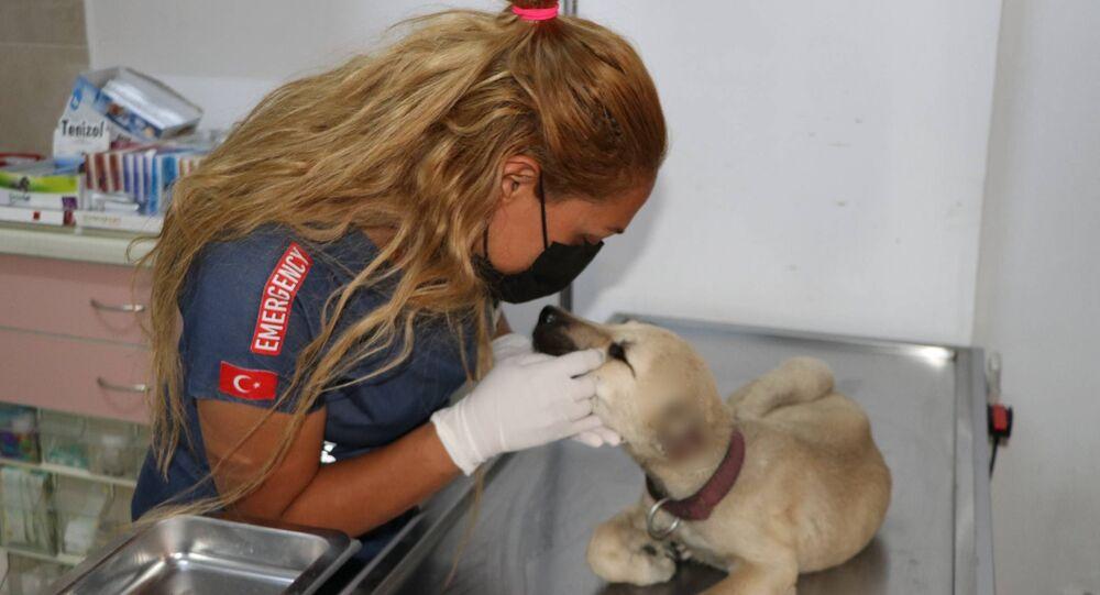 Gaziantep, yavru köpek, tedavi, veteriner
