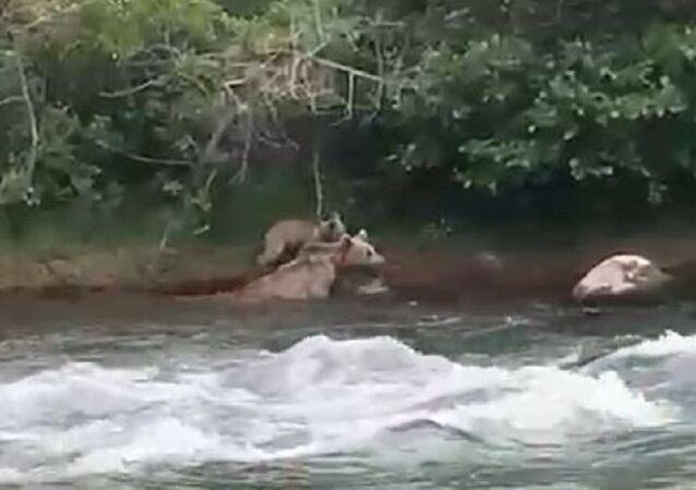 Tunceli anne ve yavru ayı
