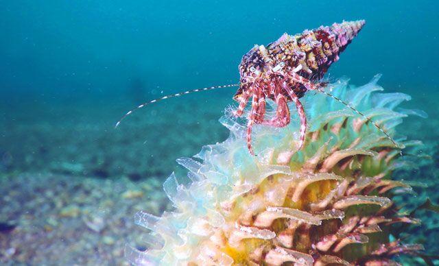 Dünya Doğayı Koruma Vakfı raporu: Akdeniz, dünyanın en hızlı ısınan ve en tuzlu denizi haline geldi