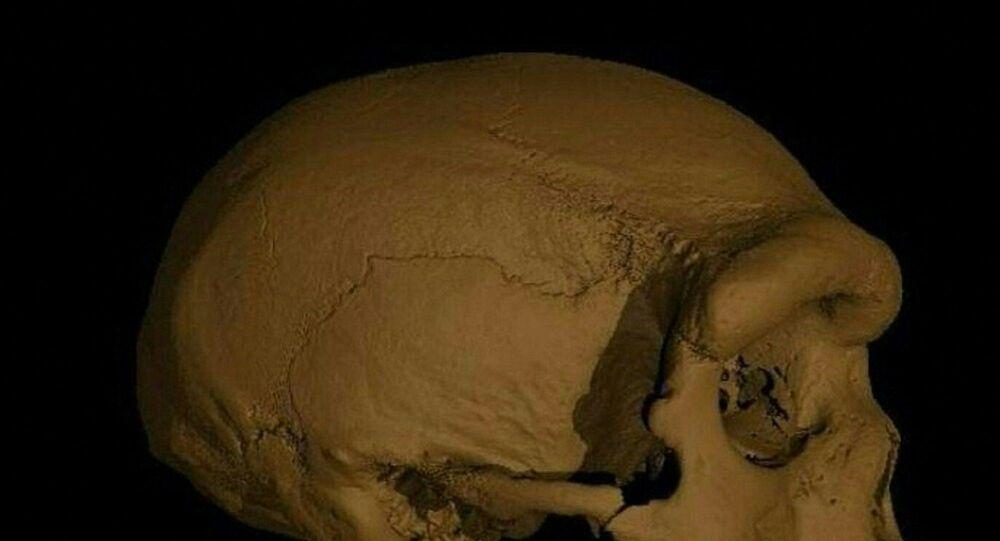 'Ejderha Adam' kafatası