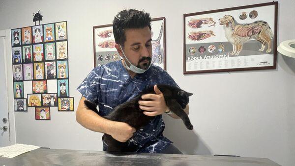 hayvanlara mikroçip - Sputnik Türkiye