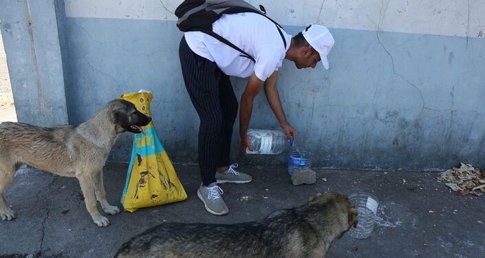 Hiçbir kurumdan destek alamayan gönüllüler, tüm zor şartlara rağmen kendi imkanları ve bireysel bazı yardımlarla sokak hayvanlarının sağlıklı yaşaması için mücadele ediyor.