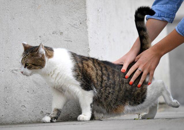 Kedi - sokak