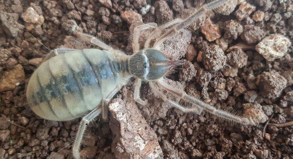 bö böceği