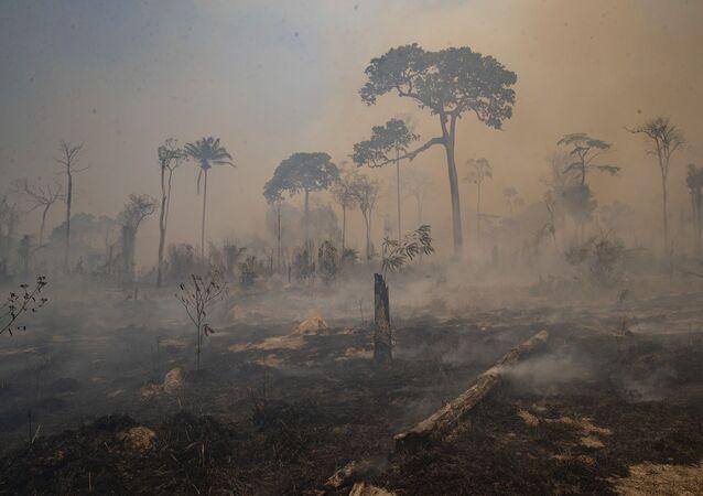 Amazon  - yangın
