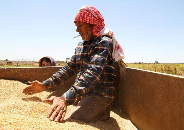 Suriye başkenti Şam'ın dışındaki Deyr Habiyeh'de buğday hasadını kontrol eden çiftçi (17 Haziran 2021)