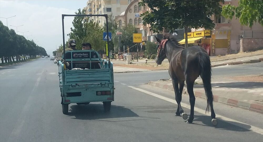 Atını elektrikli motosiklete bağlayan sürücüye ceza kesildi