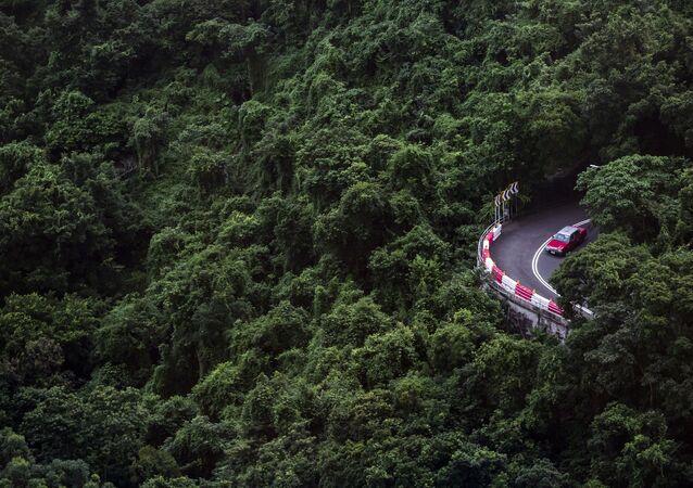 Hong Kong - ağaç - araba