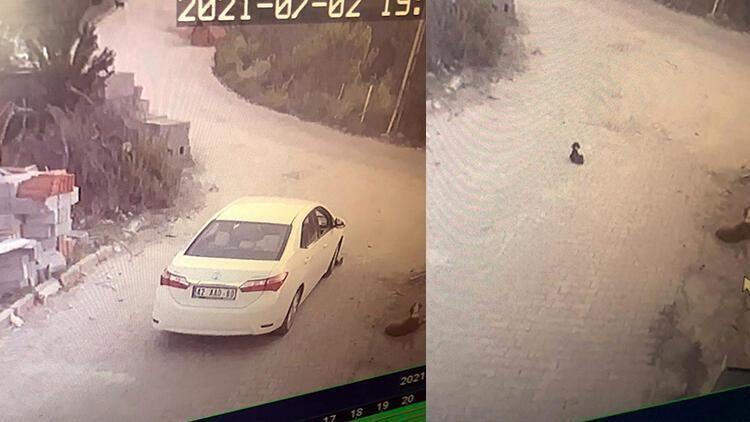 Konya'da sürücü yavru köpeği ezdi, yoluna devam etti