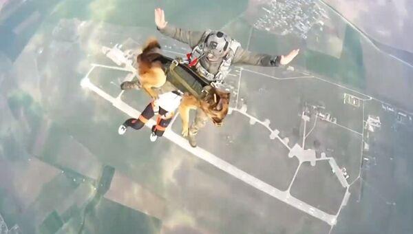 Rusya - köpekle paraşüt talimi - Sputnik Türkiye