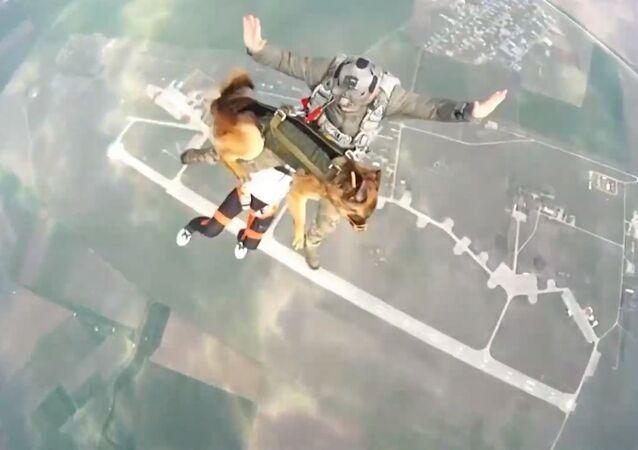 Rusya - köpekle paraşüt talimi