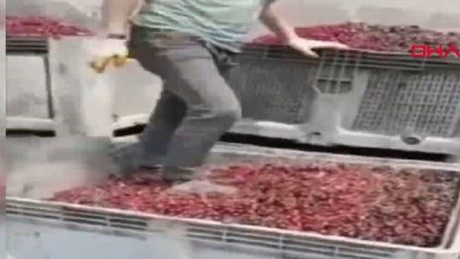 Meyve suyu yapılacak vişnelerin ayakkabıyla çiğnendiği görüntülere para cezası - Sputnik Türkiye, 1920, 08.07.2021