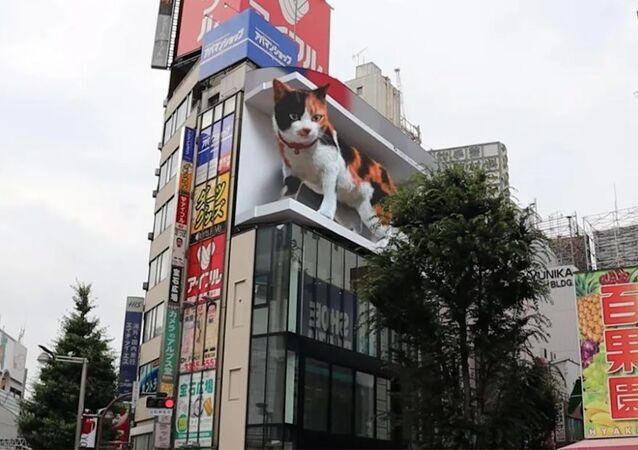 Shinjuku kedisi Tokyo