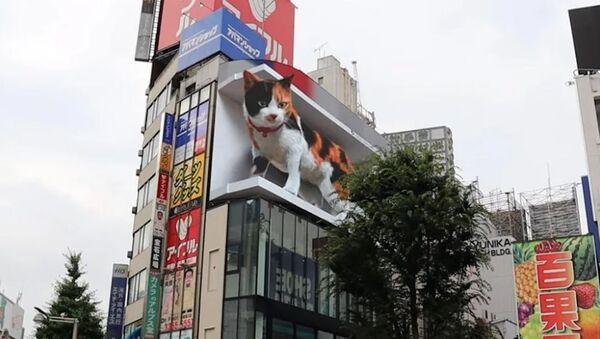 Shinjuku kedisi Tokyo - Sputnik Türkiye