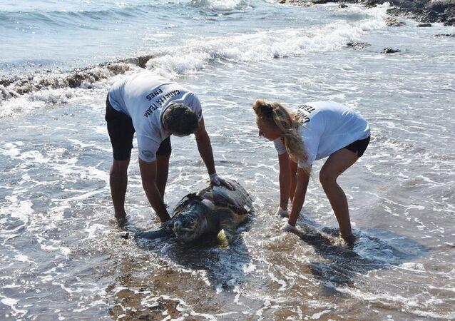Kıyıya vuran deniz kaplumbağası