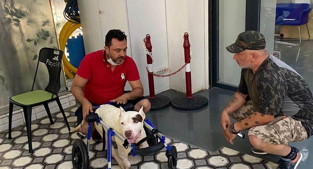 Şırnak'ta ayakları kesilen köpek için hayvanseverler seferber oldu