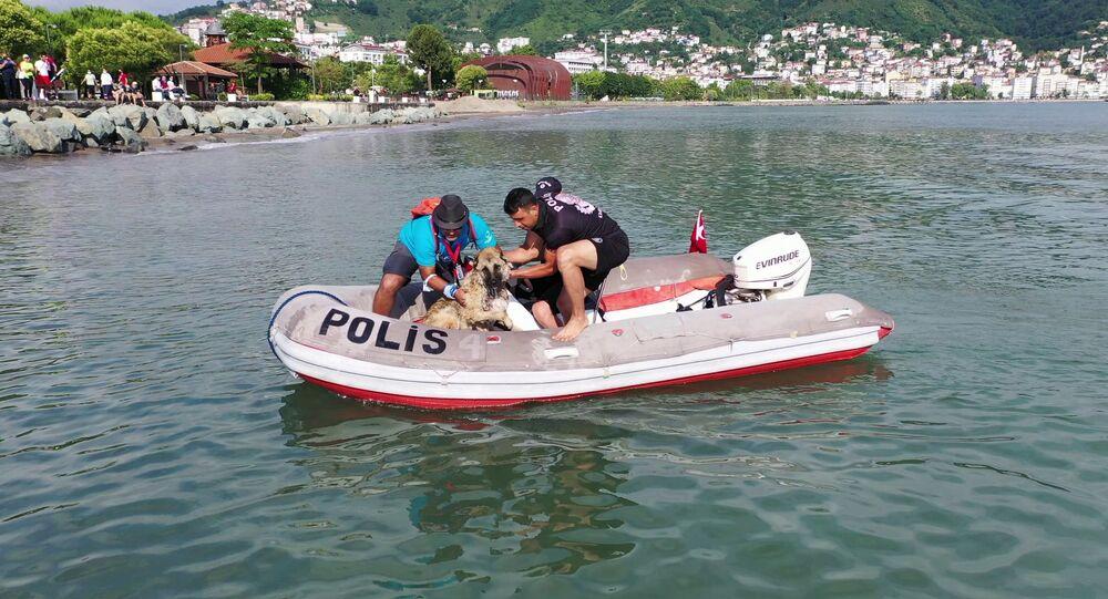 Triatlon yarışmasında denize atlayan köpek