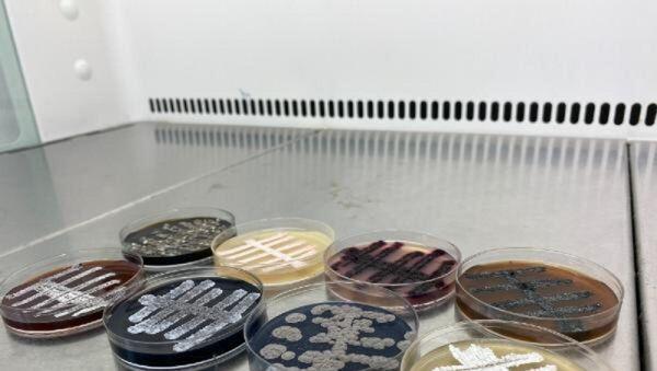 bakteri - kültür  - Sputnik Türkiye