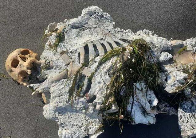 Samsun'da sahile vuran iskelet incelemeye alındı