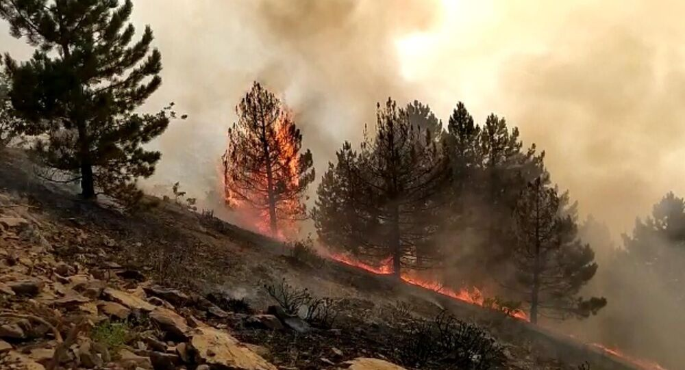 Elazığ Sivrice orman yangını