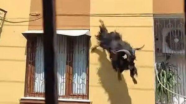 çatıdan düşen keçi - Sputnik Türkiye