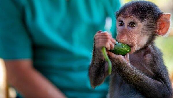 Annesinin kabullenmediği yavru babun Nisan, doğa parkının maskotu oldu  - Sputnik Türkiye