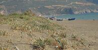 Yaz aylarının gelmesiyle denizlere akın edenleri uyaran Antakya Doğa Sanat ve Turizm Derneği Başkanı Biyolog Dr. Samim Kayıkçı, kum zambağının korumak gerektiğini söyledi.