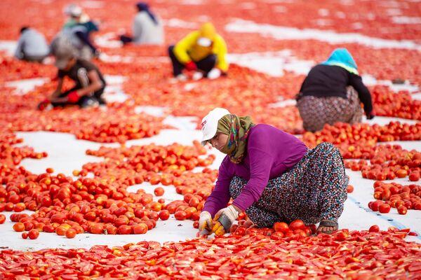 Tüm domatesler kesildikten sonra işlem tamamlanıyor.  - Sputnik Türkiye