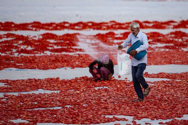 Serilen domatesler, bir işçi tarafından tuzlanıyor.  - Sputnik Türkiye