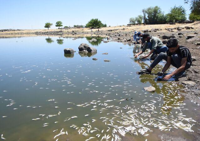 Şanlıurfa'nın Siverek ilçesinde 2 asırdır balıkların eksik olmadığı Şilan Çayı'nda, son günlerde yaşanan toplu balık ölümleri korkutuyor. Sebebi henüz bilinmeyen olayın kuraklık nedeniyle su seviyesinin düşmesinden kaynaklandığı tahmin ediliyor.