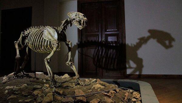 fosil müzesi - Sputnik Türkiye