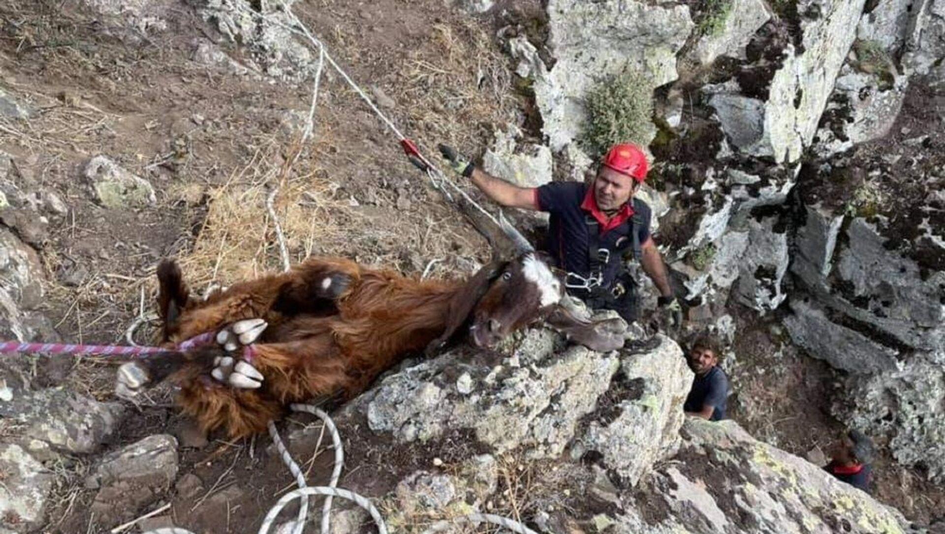 Dağlık alanda 10 gündür mahsur kalan keçiler kurtarıldı  - Sputnik Türkiye, 1920, 27.07.2021
