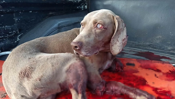 'Güvercinlerine saldırdığı' gerekçesiyle köpeğini öldürdü - Sputnik Türkiye