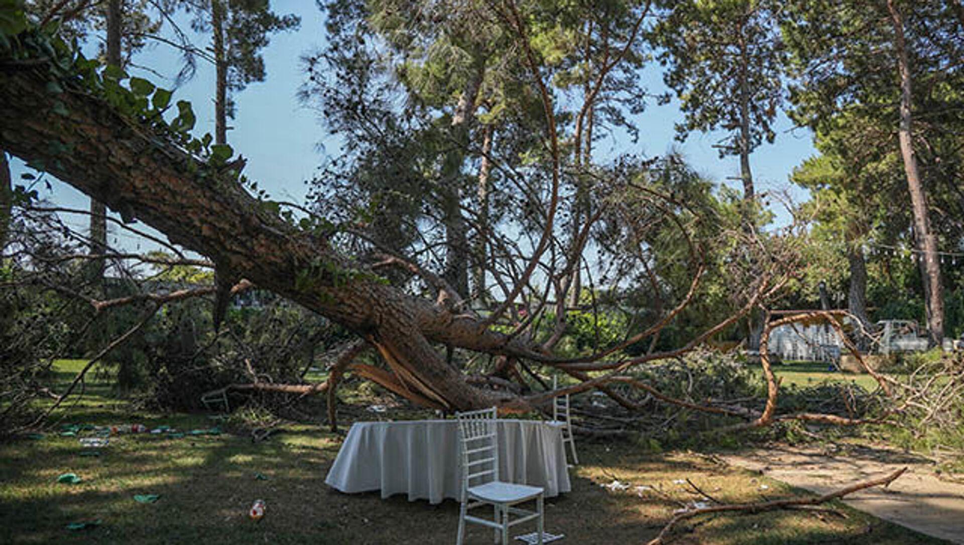 Kır düğününde 1 kişi üzerine ağaç devrilmesi sonucu öldü - Sputnik Türkiye, 1920, 27.07.2021