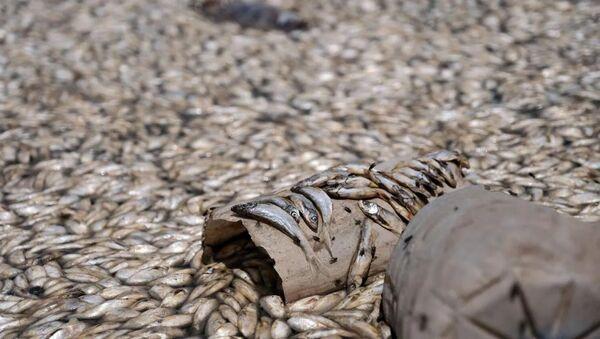 Konya'da binlerce balık oksijensizlikten öldü - Sputnik Türkiye