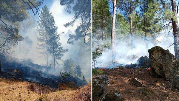 Adana'nın 2 ilçesinde korkutan orman yangını: Ekipler seferber oldu - Sputnik Türkiye