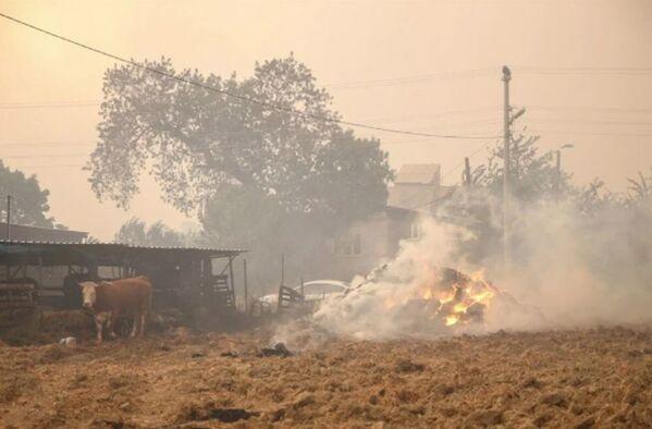 Yangından 62 kişi etkilendi. 3'ü yanık, 2'si kırık, 57'siyse dumana maruz kalma sebebiyle tedavi altına alındı. Tedavileri tamamlanan 51 kişinin taburcu edildiği bildirildi.  - Sputnik Türkiye