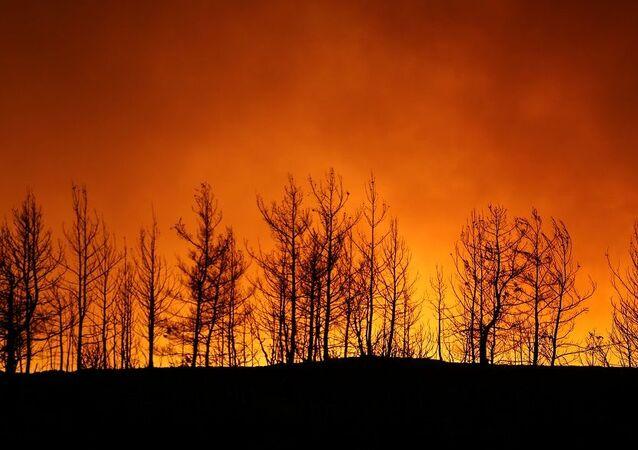 Yangın-Türkiye