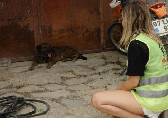Ölen çiftin köpekleri evin önünden ayrılmıyor