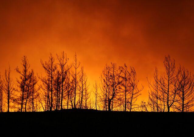 Manavgat- Orman yangını