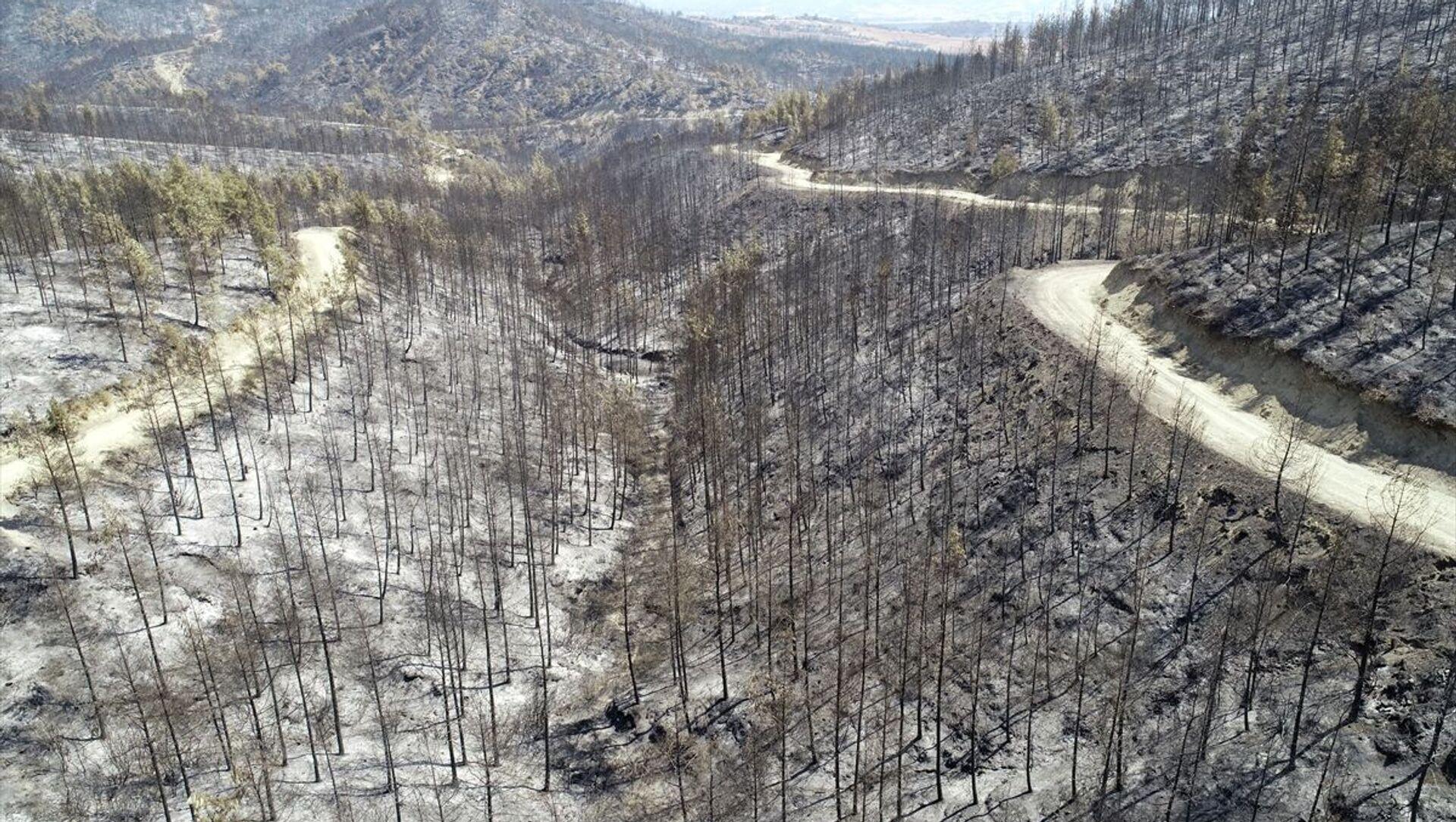 Orman yangını - Sputnik Türkiye, 1920, 03.08.2021